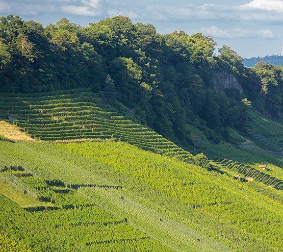 Steillagen1 Branchenverband St. Galler Wein