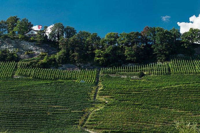 Weingut am Steinig Tisch Branchenverband St. Galler Wein